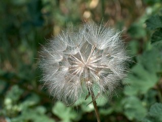Macro flore