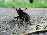 scarabée poster