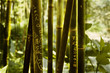 bambous avec graffitis