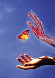 papillon et avant bras sur ciel bleu poster