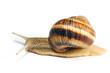 crawling snail