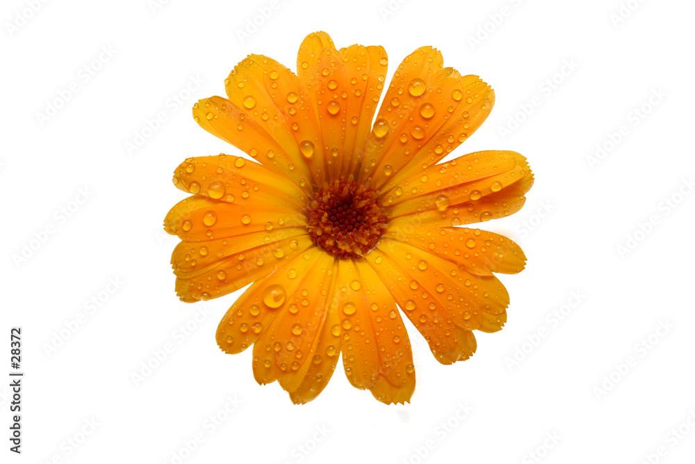 kwiat żółty makro - powiększenie