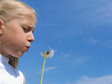 little girl blows on dandelion poster