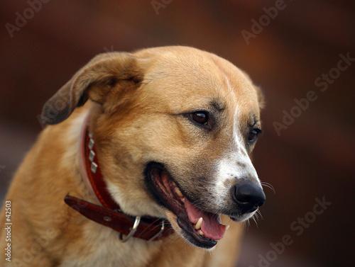 poster of portrait running dog