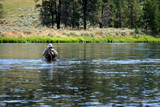wading in yellowstone river poster