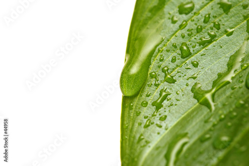 poster of water droplets on leaf