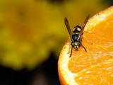 wasp on orange poster