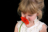 beautiful four year old girl smelling flower poster