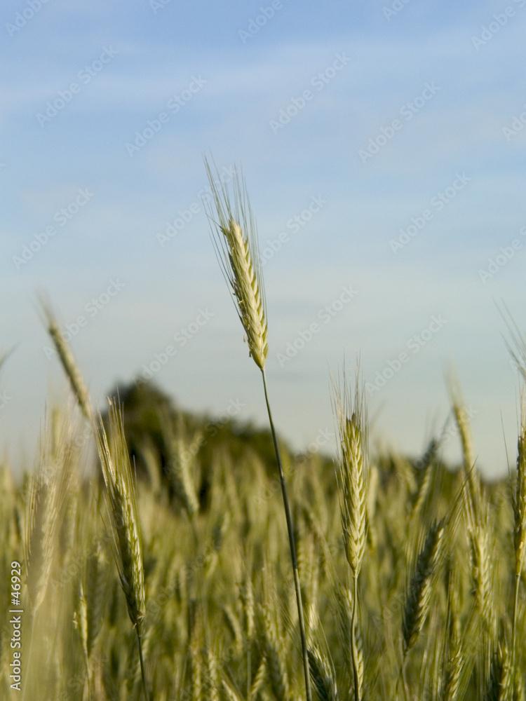 pole lato rolnictwo - powiększenie