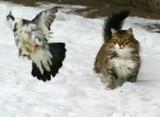 cat hunter poster