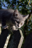 kitten on a fence poster