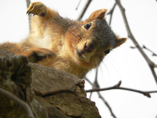 squirrel in funny pose