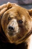 smiling bear poster
