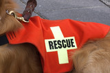 search and rescue dog. poster