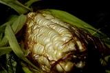 white corn poster