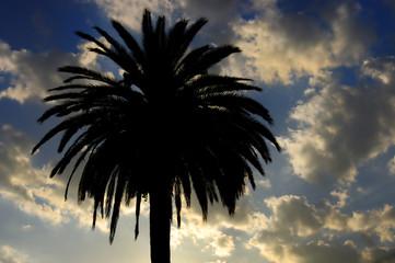 sunset, palm springs ca