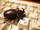 bug on the keyboard poster