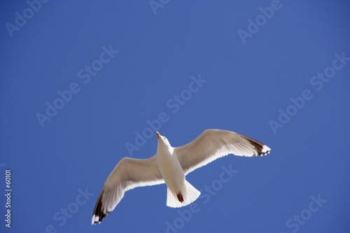 seagull flying up