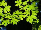 leaf poster