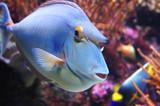 marine fish poster