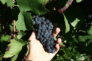 raisins ou raison ?
