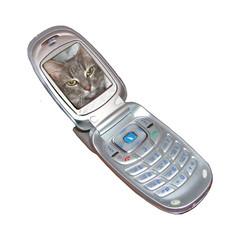 cat in phone
