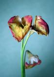 sad bouquet poster