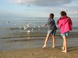 children feeding gulls poster
