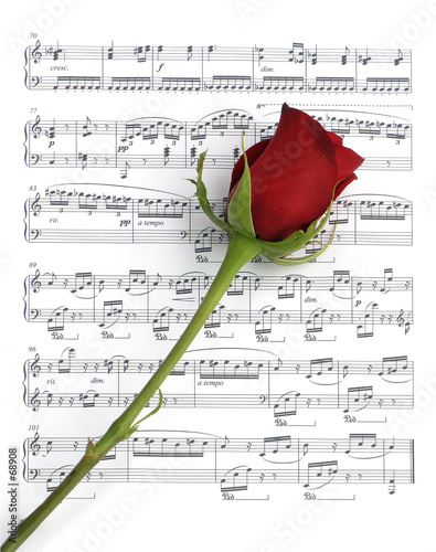 canvas print picture single music rose