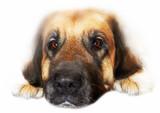 sad dog poster