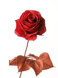 red paper rose poster