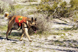 search dog poster