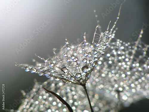 Foto op Canvas Paardebloemen en water waterdrops on dandelion