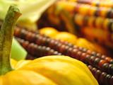mini pumpkins and indian corn poster