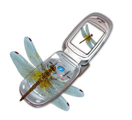 phone and dragonfly