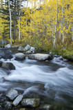 mountain stream, fall colors poster