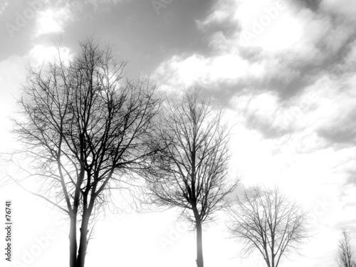 tree silhouette - 76741