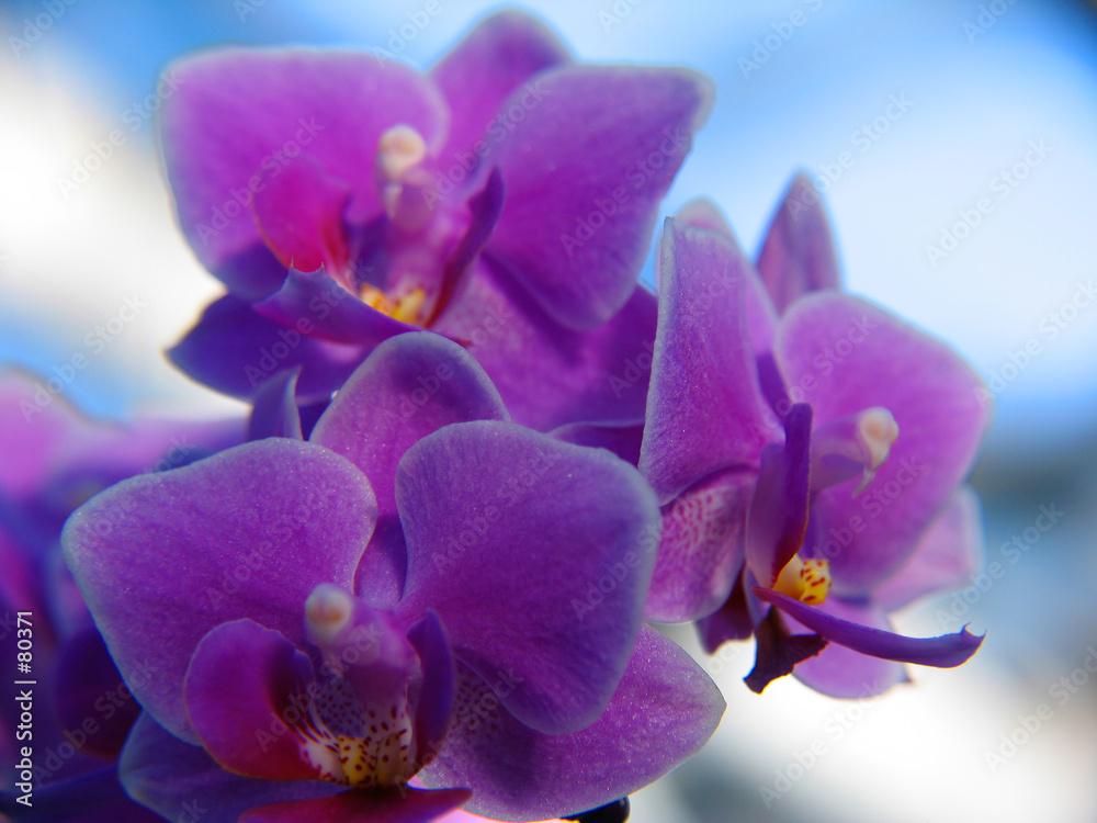kwiat kwitnący delikatny - powiększenie