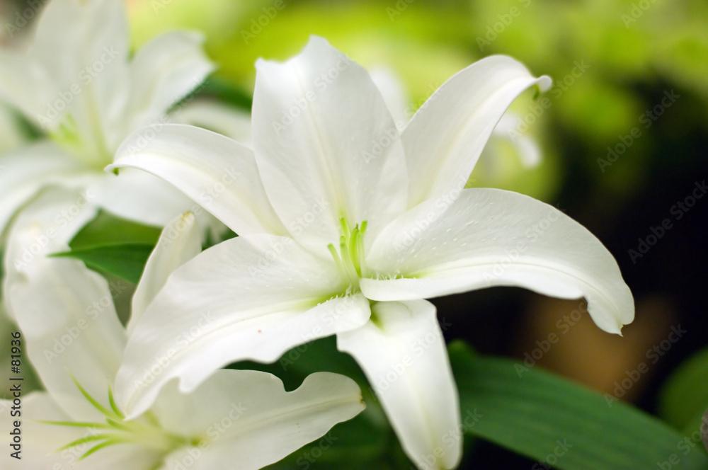 kwiat pachnący ogród - powiększenie