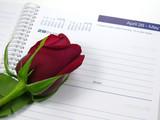 red rose  calendar poster