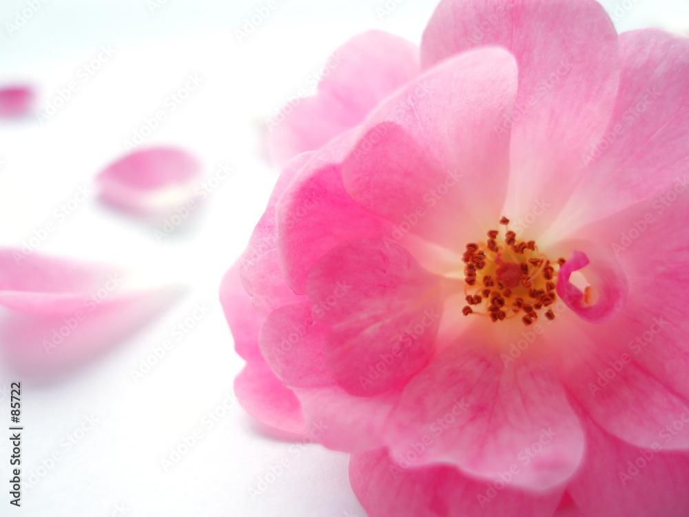 różowy miłość valentine - powiększenie