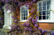 traditional georgian house front with wisteria