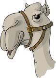 camel head poster