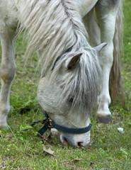 white horse head