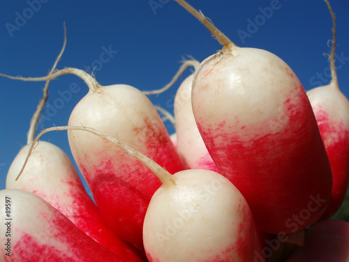 red and white radish