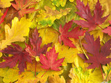 colors of fall poster