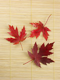 three silver maple leaves poster
