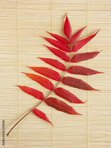 acacia leaf poster