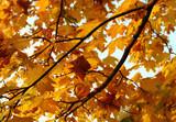 autumn, fall - Fine Art prints