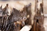 tree stump detail 2 poster